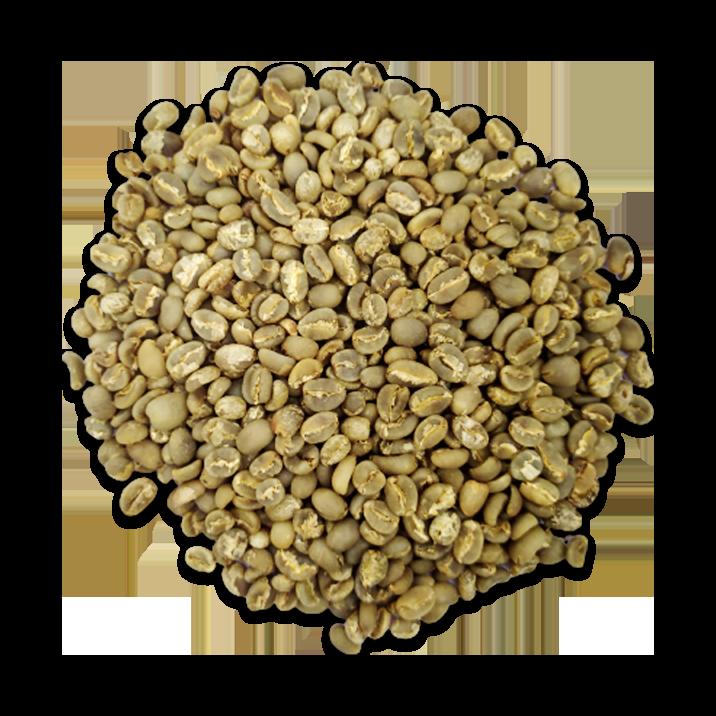 arabica gayo coffee