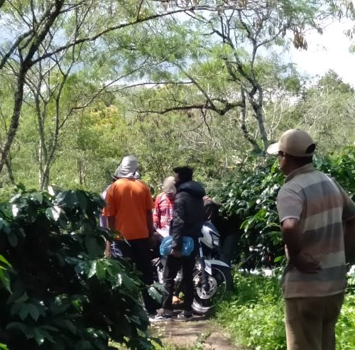 social project for gayo coffee farmers