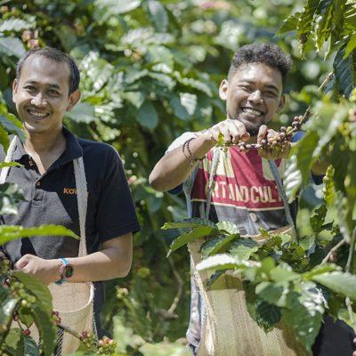 gayo coffee farmers
